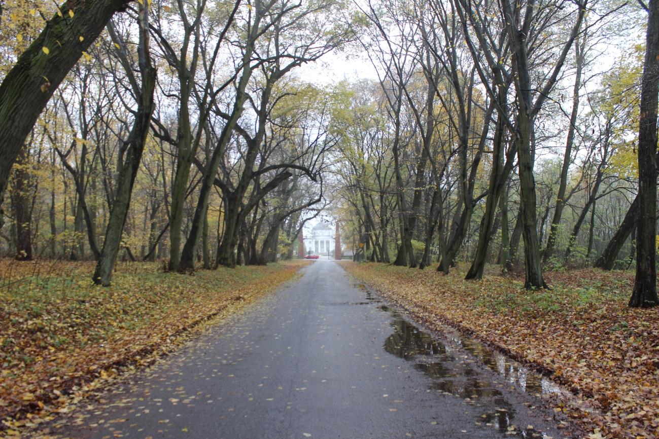 Na zdjęciu: Zabytkowa aleja w Lubostroniu. autor zdjęcia: dr Maciej Świątkowski