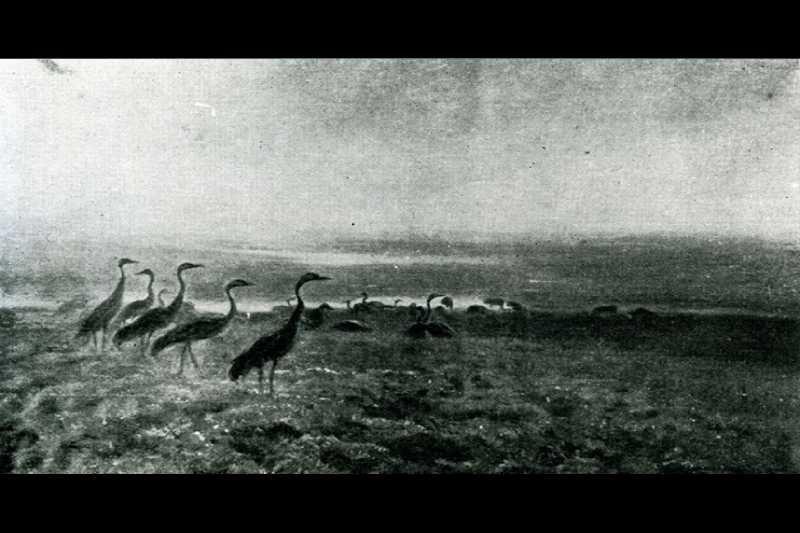 Obraz - Stado żurawi o świcie,  Józef Chełmoński; olej,  płótno; 87,5 x 144,7 cm